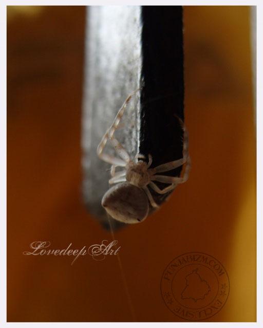 spider shot!!!