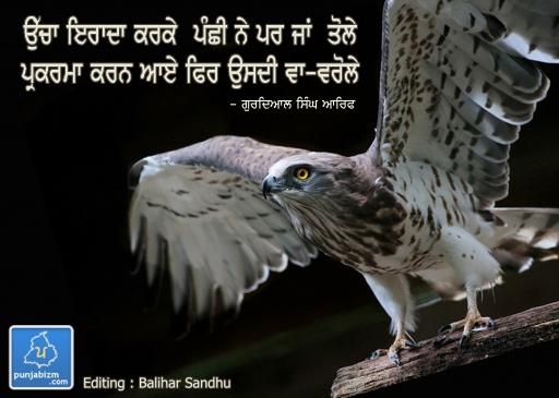 Panchhi